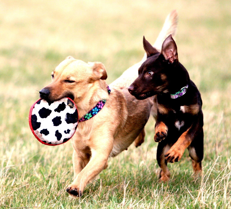 Hunde Spile